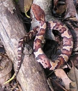 BAAAD Snake!
